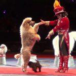 Cho Thuê Biểu Diễn Xiếc Chó